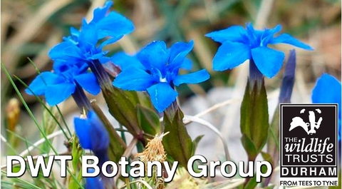 Blue flowers labelled DWT Botany Group