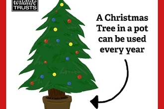 Graphic showing a Christmas tree in a pot