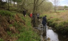 Volunteers surveying water voles in stream